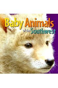 Baby Animals of the Southwest
