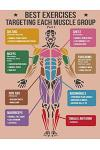 Best Exercise Targeting Each Muscle Group