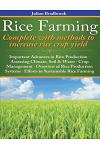 Rice Farming complete with methods to increase rice crop yield