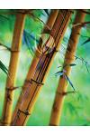 Bamboo Forest Grid Sketchbook: Sketch Book Notebook