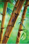 Bamboo Forest Journal: Blank Notebook Diary